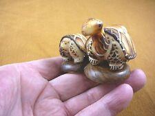 (TNE-T-BOX-448) BOX TURTLE Mama + Baby TAGUA NUT Figurine Vegetable pair turtles