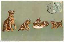 HELENA MAGUIRE. CHIENS. CHIOTS. GAUFRé. DOGS. EMBOSSED