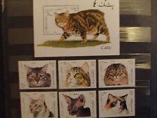 Briefmarken Katzen Afghanistan 1997 Bl.94 + 1726-31,postfrisch