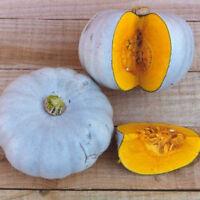 Vegetable - Squash - Crown Prince - 6 Seeds