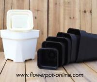 Lithops A Set Round Black Wanxiang Pots S-XXXL size For Haworthias Echeverias