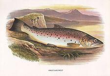 VINTAGE FACSIMILE FISH PRINT ~ GREAT LAKE TROUT ~ A. F. LYDON