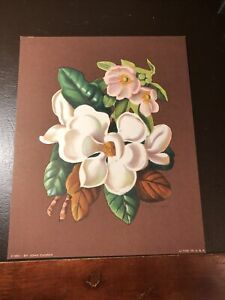Vtg 8x10 Eugenia Grant Floral Art Print By JOHN COOPER- 1950 Lithograph