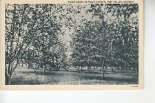 Pecan Grove in Peach County Fort Valley GA