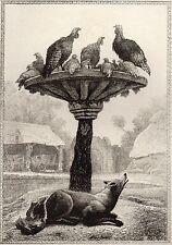 EAU FORTE / Fables de la Fontaine 1883 / LE RENARD ET LES POULETS D'INDE