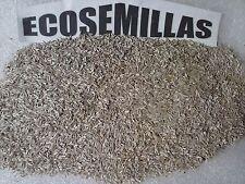 Lechuga romana larga, más de 1000 semillas ECOLOGICAS Compra 2 envío 3