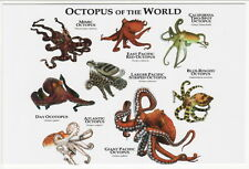 Art Postcard Octopus Octopii of the World --- 8 Shown