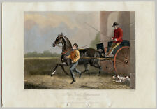 LITHOGRAPHIE ANCIENNE, E. Corbet, E. Hacker, Ely, cheval