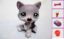 Littlest Pet Shop Dog Blythe Husky 1617 and Free Accessory Authentic Lps