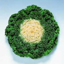 Flowering Kale Cabbage Chidori White F1 Hybrid 20 seeds