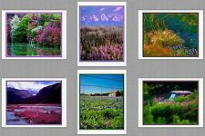 6 Flower Scenes Original Photo Blank Greeting Note Cards Bluebonnet Fireweed