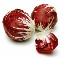 RADICCHIO * PALLA ROSA * VITAMIN PACKED * 100 SEEDS *
