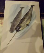 N°77 Mammal Poster Narwhal Whale Greenland and Canadian Arctic