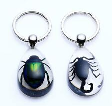1pair real insect green beetle&black scorpion Xmas gift clear style key-chain