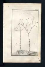 Gravure plante botanique 1767 PETIT LIN PURGATIF