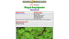 Dwarf Four leaf clover Philipine Kaya-kayapuan (44 Oz Plastic Cup Plus Bonus)