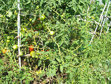 Tomato Cage BY U Plans!!!