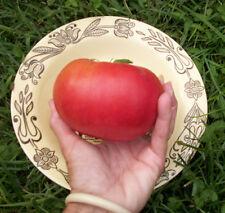 TOMATE mas GIGANTE ROSA giant tomato 40 semillas seeds