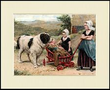 NEWFOUNDLAND DOG WITH GIRLS AND BABY CART LOVELY PRINT MOUNTED READY TO FRAME