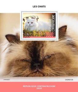 Central African Rep Cats Stamps 2020 MNH Turkish Angora Himalayan Cat 1v S/S