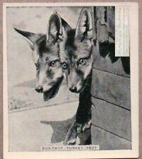 2 Fox Pups Poking Their Heads Around A Corner 1930s Trade Ad Card