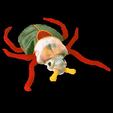 Ty Beanie Baby - Scurry The Beetle. Best