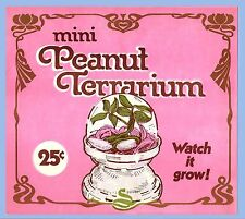 MINI PEANUT TERRARIUM - WATCH IT GROW! - VENDING HEADER DISPLAY CARD