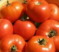 MARGLOBE  SUPREME TOMATO SEEDS 100+ GARDEN vegetables SAUCE salad FREE SHIPPING