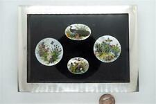 ANTIQUE ENGLISH SILVER PICTURE FRAME & NATURAL FEATHER BIRD MINIATURES c1904