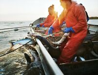 Bottom mono sea gill net 35 feet long, fully rigged new