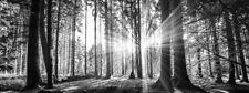 Bilder Wandbild Keilrahmen Leinwand Wald schwarz weiß  50 X 150 cm Art.501566