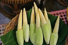 HOT!! MINI BABY CORN SEEDS VEGETABLE POPORN FROM THAILAND 75 SEEDS