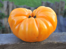 30 DR. WYCHE'S YELLOW TOMATO SEEDS HEIRLOOM 2018 (non-gmo heirloom seed)