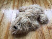 "Vintage Tonka  Pound Puppies Puppy Large Plush 1985 18"" Furries Dog Collect"
