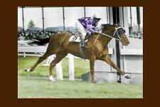 TOBIN BRONZE 1967 Caulfield Cup racehorse modern Digital Photo Postcard