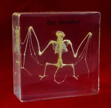 Real Bat Skeleton Taxidermy Specimen in Clear Acrylic Lucite Display