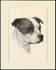 STAFFORDSHIRE BULL TERRIER GREAT HEAD STUDY DOG PRINT MOUNTED READY TO FRAME