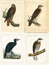 Sale! 1859 USPRR RAILROAD SURVEY ZOOLOGICAL REPORT & 26 BIRD LITHOGRAPHS Train
