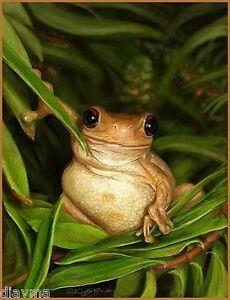 "© ART - TREE FROG ""peek-a-boo"" Wildlife Animal Original artist print by Di"