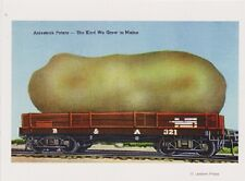 """The Aroostook Potatoe"" ...The Kind We Grow in Maine- {Postcard} (XT61)"