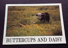 POSTCARD: BUTTERCUPS AND DAISY: UN POSTED