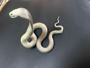 KING COBRA TAXIDERMY SNAKE GREAT FOR MUSTANG SHELBY DISPLAY