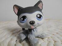 petshop authentic littlest LPS chien husky yeux bleu noir blanc dog #210
