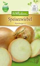 Cebolla 'Rijnsburger 4' - AJOS Cepa,speisezwiebel Medio Semillas 4146