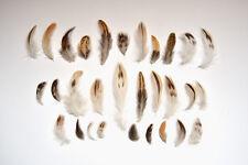 100 Naturel Noir Marron Blanc Crème plumes Oiseau Petit Mixte Spotted Tan 3-10 cm