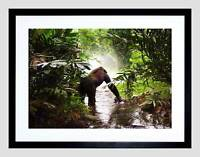 ANIMAL APE MONKEY GORILLA JUNGLE KONG BLACK FRAMED ART PRINT PICTURE B12X4719
