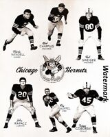 AAFC NFL 1949 Chicago Hornets Team Picture 8 X 10 Photo Picture