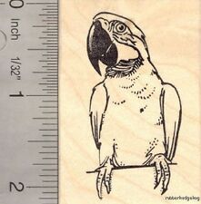 Macaw Parrot Rubber Stamp Bird Perched H16310 WM Wildlife