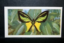 Tailed Birdwing    New Guinea  Tropical Butterfly  Illustrated Colour Card  VGC