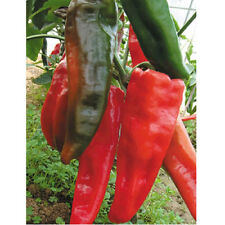 50Pcs Rare Giant Red Spicy Chili Pepper Seeds Vegetable Plant Garden